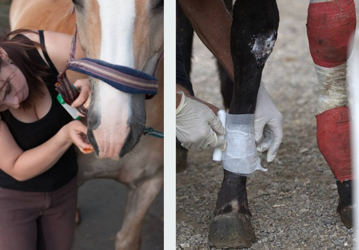 Раны лошади фото