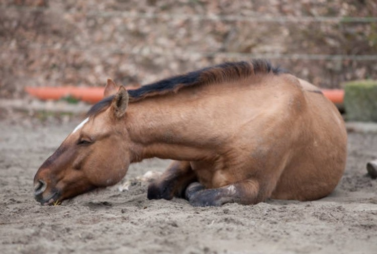 Помощь лошади