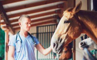 Заболевания органов головы у лошади