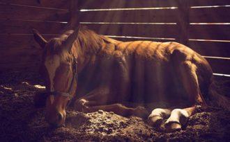 Заболевания желудочно-кишечного тракта у лошадей