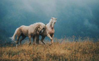 Высказывания про лошадей