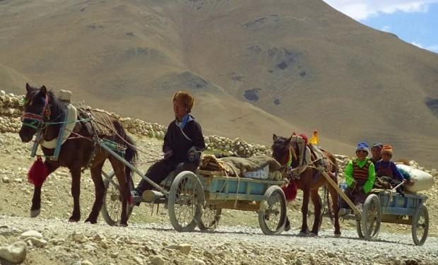 Тибетский пони фото