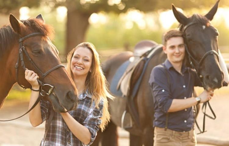 Безопасность лошадь